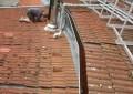 Sanierung der Dachkonstruktion - Bestand Dachaufbauten
